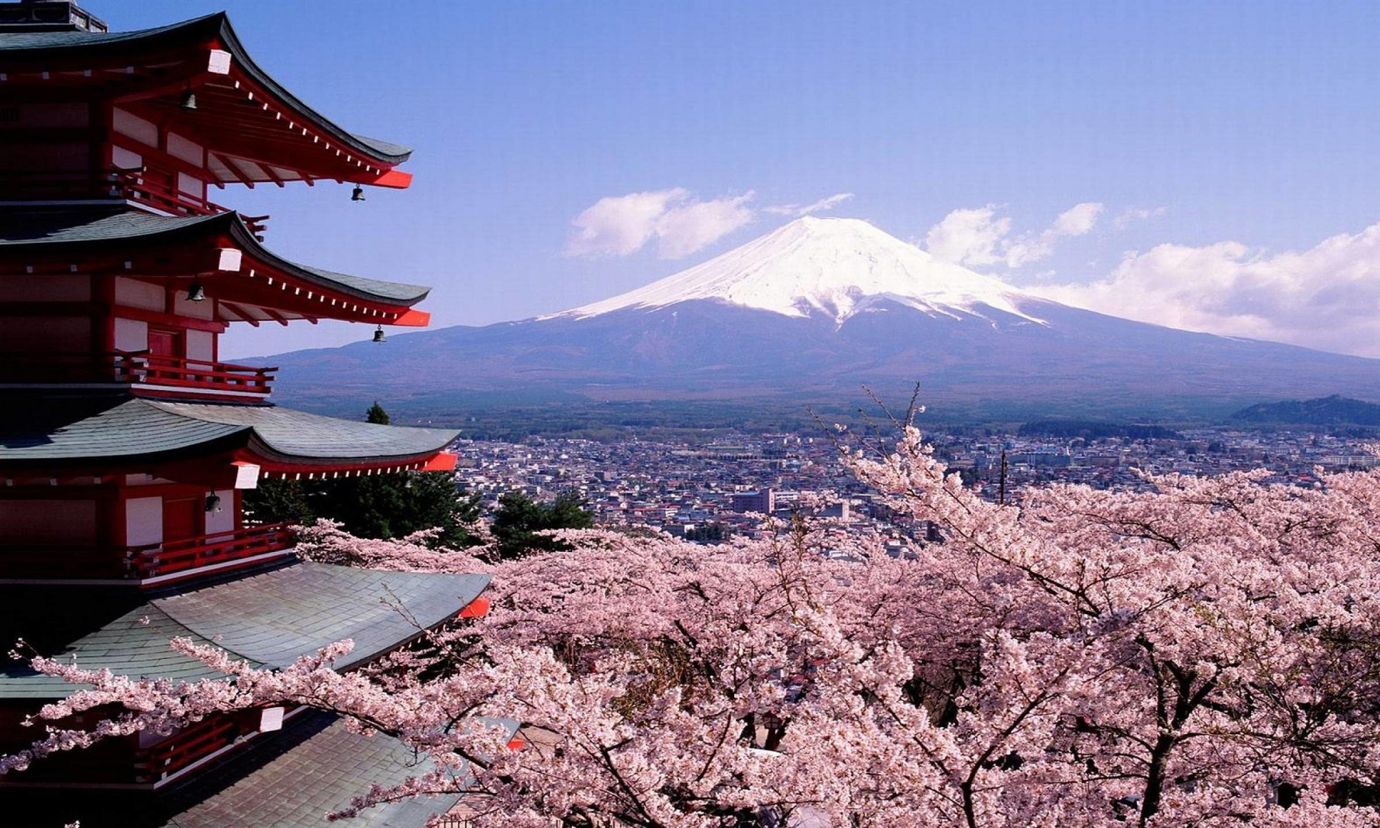 Fuji mountain and sakura panorama.